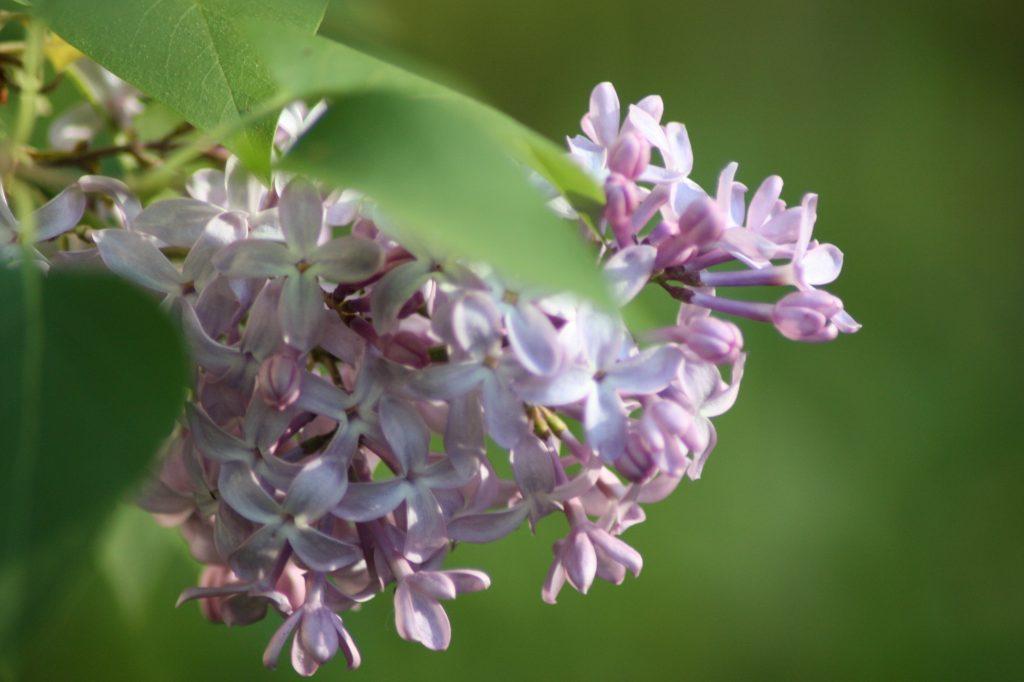 Chines Herbal Medicine